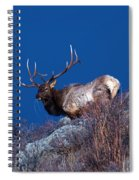 Wild Moon Spiral Notebook