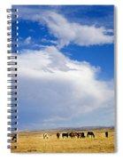 Wild Mustang Herd Grazing Spiral Notebook