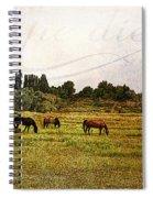 Wild Mustangs Carpe Diem Spiral Notebook