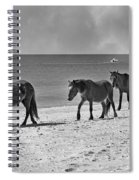 Wild Mustangs Of Shackleford Spiral Notebook