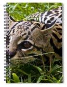 Wild Ocelot Spiral Notebook