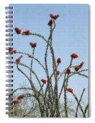 Wild Ocotillo In Bloom Spiral Notebook
