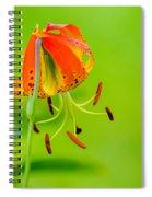 Wild Orange Lilies Spiral Notebook
