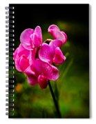 Wild Pea Flower Spiral Notebook
