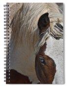Wild Pinto Spiral Notebook