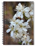 Wild Plum Blooms Spiral Notebook