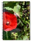 Wild Poppy Spiral Notebook