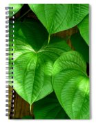 Wild Potato Vine Spiral Notebook