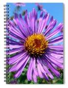 Wild Purple Aster Spiral Notebook