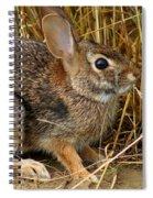 Wild Rabbit Spiral Notebook
