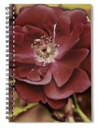 Wild Rose Iv Spiral Notebook