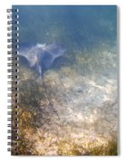 Wild Sting Ray Spiral Notebook