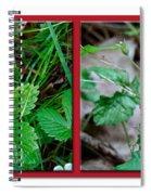 Wild Strawberry Plant - Fragaria Virginiana Spiral Notebook