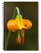 Wild Tiger Lily Spiral Notebook