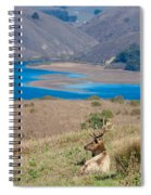 Wild Wapiti Surveying His Kingdom Spiral Notebook