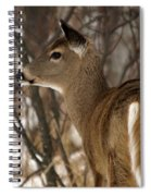 Wild White-tailed Deer Spiral Notebook