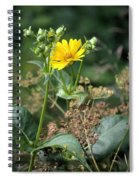Wild Yellow Spiral Notebook