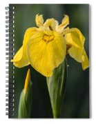 Wild Yellow Iris Spiral Notebook