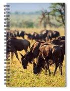 Wildebeests Herd. Gnu On African Savanna Spiral Notebook