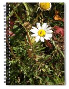 Wildflower @ Kit Carson Spiral Notebook