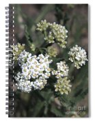 Wildflowers - White Yarrow Spiral Notebook