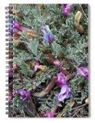 Wildflowers - Woolly-pod Locoweed Spiral Notebook