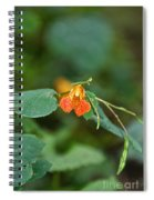 Wildly Orange Spiral Notebook