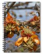 Wiliwili Flowers - Erythrina Sandwicensis - Kahikinui Maui Hawaii Spiral Notebook