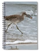 Willet With Mole Crab Spiral Notebook