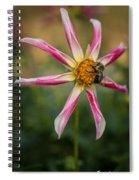 Willie Willie Dahlia Spiral Notebook