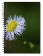 Willow Aster Spiral Notebook