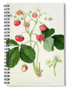 Wilmot's Cocks Comb Scarlet Strawberry Spiral Notebook