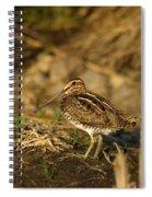 Wilson's Snipe Spiral Notebook