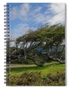 Wind-bent Tree In Tierra Del Fuego Patagonia  Spiral Notebook