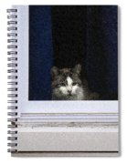 Window Cat Spiral Notebook