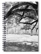 Window Oak - Bw Spiral Notebook