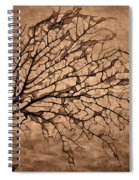 Windowpane Coral Spiral Notebook