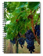 Wine Grapes On The Vine Spiral Notebook