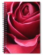 Wine Rose 6 Spiral Notebook