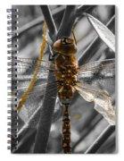Wing Damage Spiral Notebook