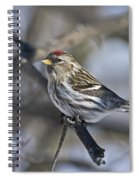 Winter Beauty.. Spiral Notebook