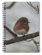 Winter Blue Bird 1 Spiral Notebook