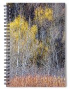 Winter Forest Landscape With Bare Trees Spiral Notebook