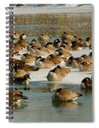 Winter Geese - 07 Spiral Notebook