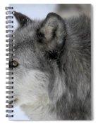 Winter Intensity Spiral Notebook