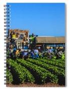 Winter Lettuce Harvest Spiral Notebook