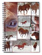 Winter Moments- With The Flashy Paso Fino Stallion Spiral Notebook