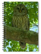 Winter Park Owl Spiral Notebook
