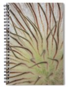 Winter Pasque Flower Spiral Notebook