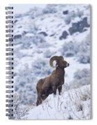 Winter Ram Spiral Notebook